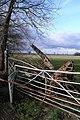 Damaged Gate, Warren Lane - geograph.org.uk - 728451.jpg