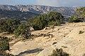 Dana Nature - panoramio (12).jpg