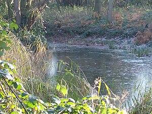 Sudbrook (stream) - Dann's Pond, Richmond Park