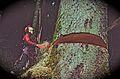 Dave's Tree Care - panoramio.jpg