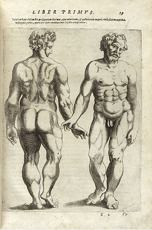 Giambattista della Porta - From De humana physiognomonia, 1586