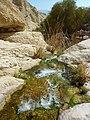 Dead Sea Region, Israel - panoramio - Mujaddara (3).jpg