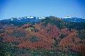 Dead trees on the Sierra National Forest (26878284272).jpg