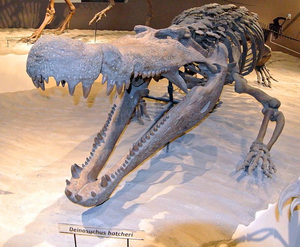 Deinosuchus hatcheri 052913