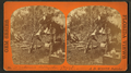Denhams alligator camp Gulf Coast, from Robert N. Dennis collection of stereoscopic views.png