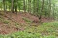 Der Wall im Norden der Hünschen Burg.jpg