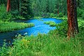 Deschutes National Forest Metolius River (36696229720).jpg