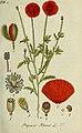 Deutschlands flora in abbildungen nach der natur (1806) (14783106763).jpg