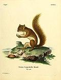 Die Säugthiere in Abbildungen nach der Natur (1774) (14764190775).jpg