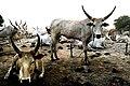 Dinka Catle, Western Bahr el Ghazzi, Sudan - panoramio.jpg