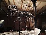 Dinosaurier Berlin naturkunde - 8.jpeg