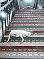 Dog on the steps (6130850242).jpg