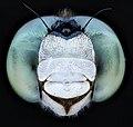 Dragon fly teal eyes 2020-08-03-18.30.54 ZS PMax UDR (50191729681).jpg