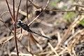 Dragonfly (14874685138).jpg