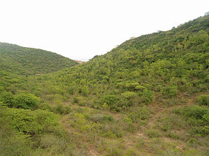East Deccan dry evergreen forests - Dry evergreen forests at Visakhapatnam, Andhra Pradesh