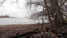 ឯកសារ:Ducks Foraging along the Lake Okanagan shoreline in Winter near Maude Roxby Wetlands.webm