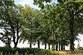 Eichenhain Kampfeld (GLB).jpg