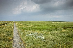 Eiderstedt - View of a marshland