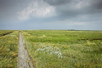 Nordfriesland (district) - Marshland in Eiderstedt, typical of the North Frisian coast
