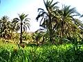 El-Oualdja-Khenchela-Algerie20.jpg