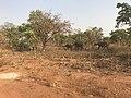 Elefanten-im-nationalpark-nazinga.jpg