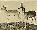 Elementary zoology (1902) (21045767738).jpg