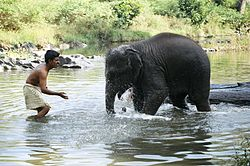 Elephant and keeper play.jpg