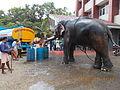 Elephant at 'Anayottam'.JPG