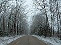 Elkhead Road in Winter - panoramio.jpg