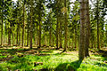 England - English Summer Forest (7183015516).jpg