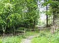 Entering Blackslough Wood - geograph.org.uk - 459855.jpg