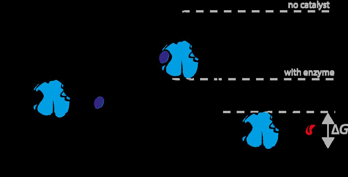 transition state analog - wikipedia diagram of enzyme reaction diagram of fission reaction #6