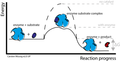 Transition state analog  Wikipedia