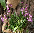 Exposition mille et une orchidées 5.jpg