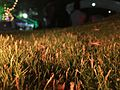 Fake grass with yellow lighting.jpg