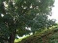 Fale - Spain - Landscape - 69.jpg
