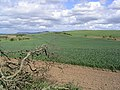 Farmland at Ilderton - geograph.org.uk - 438670.jpg