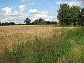 Field north of St Michael's church - geograph.org.uk - 1406555.jpg
