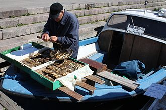 Herring as food - Fisherman selling smoked herring