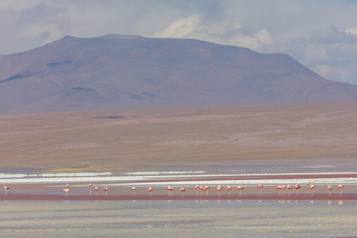 Travel to Bolivia with Terra Andina tour operator travel