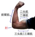 Flexión del brazo-zh.png