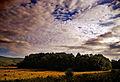 Flickr - Nicholas T - Blushed.jpg