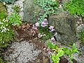 Flickr - brewbooks - Our Garden - May, 2008 (9).jpg