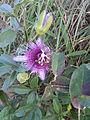 Flor na Chapada Diamantina.jpg