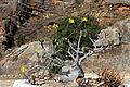 Flora Madagaskar 02.JPG