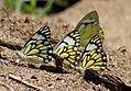 Flora and fauna of Chinnar WLS Kerala India (2).jpg