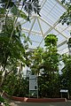 Flore tropicale-Jardin botanique Meise.jpg