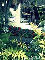 Flores, chafariz ao fundo.jpg
