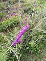 Flors al poble de Kuntur Wasi.jpg