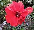 Flower (30308271781).jpg